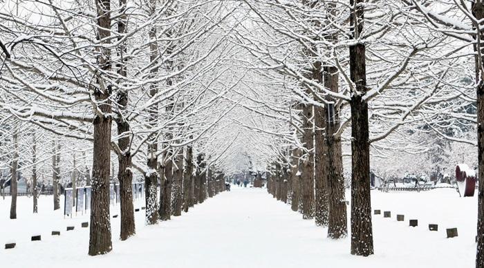 Nami-Island_winter
